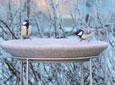 Bird Bath & Stand