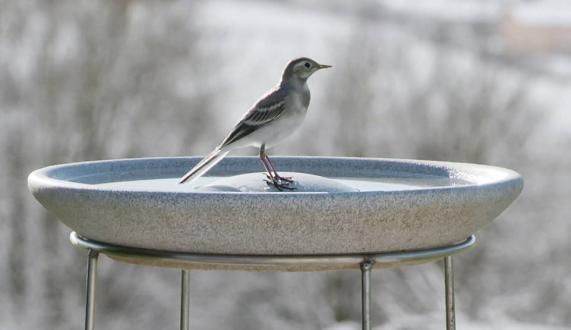 Vogeltränke Granicium