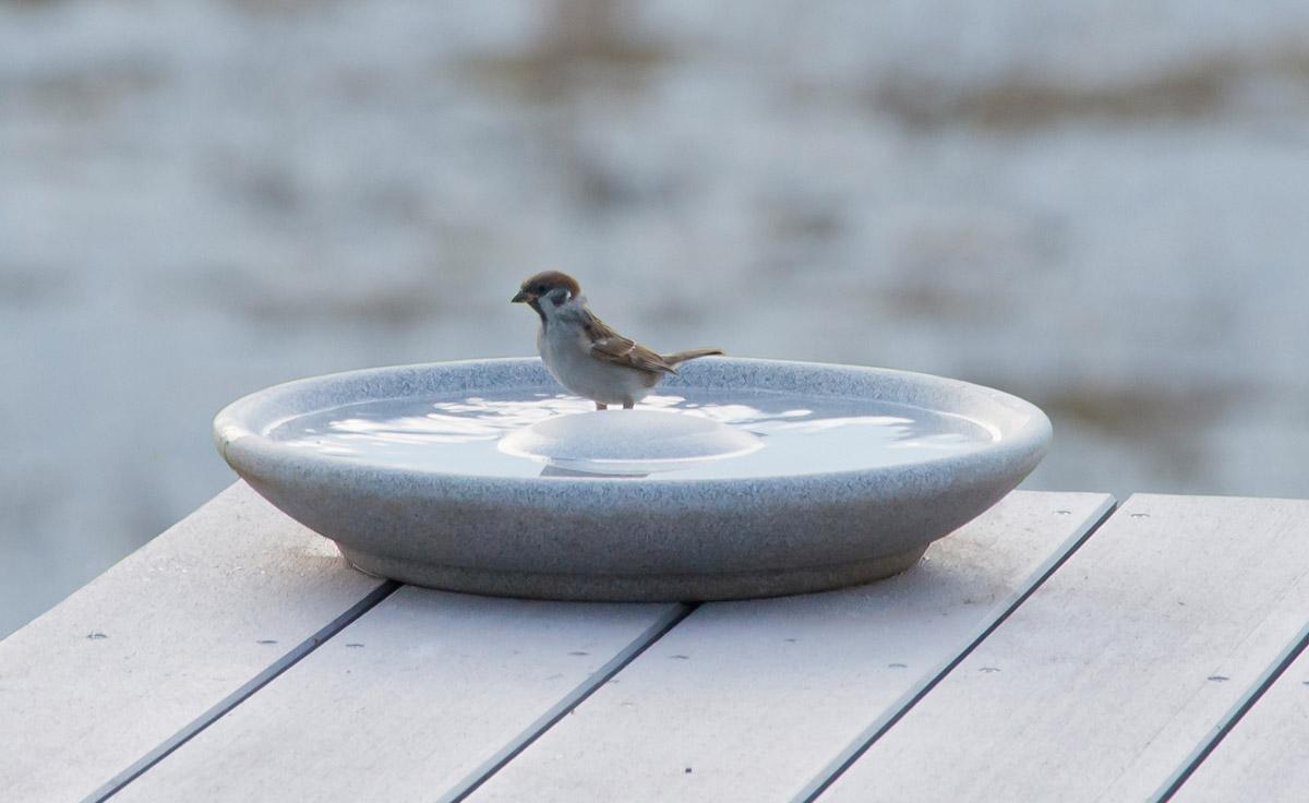 Vogeltränke Granicium Denk Keramik