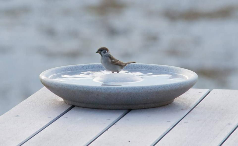 Vogeltränke Granicium®