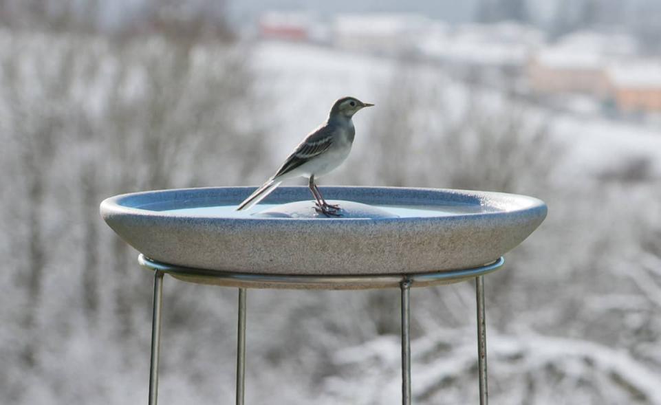 Vogeltränke Granicium® mit Ständer